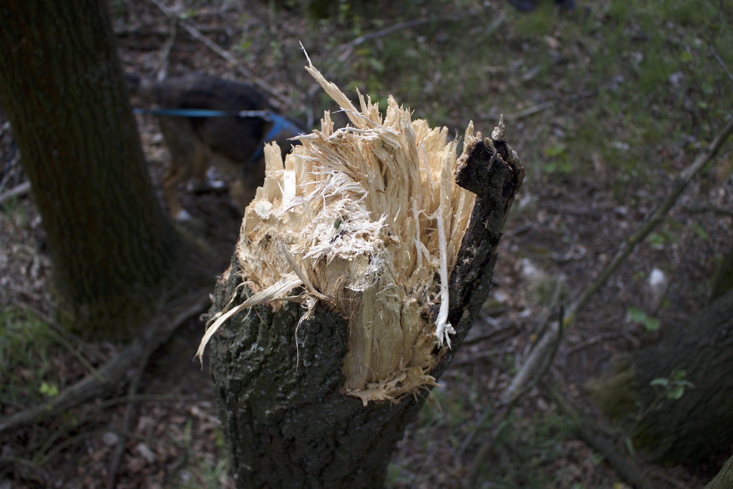tornado pod Buczkiem - szkody
